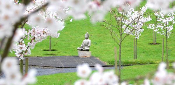 2017 Cherry Blossom