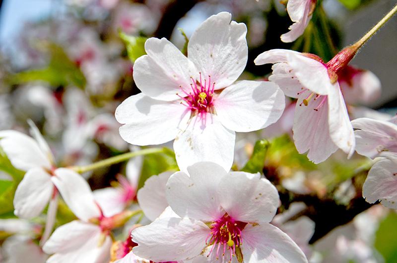 Retreat Cherry Blossom 2020