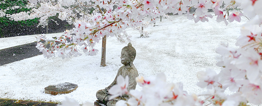 Sakura in Snow with Buddha WS_sm